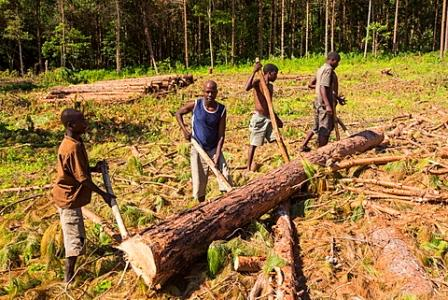 malawi struggles to break poverty deforestation link